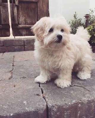 Lucy Hale's puppy Elvis