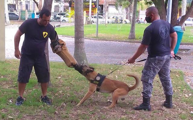 Grupamento de Operações com cães da