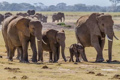 200 Elephants Dead In Zimbabwe - See Why