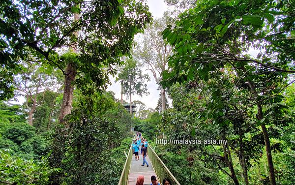 Treetop Walk Sabah