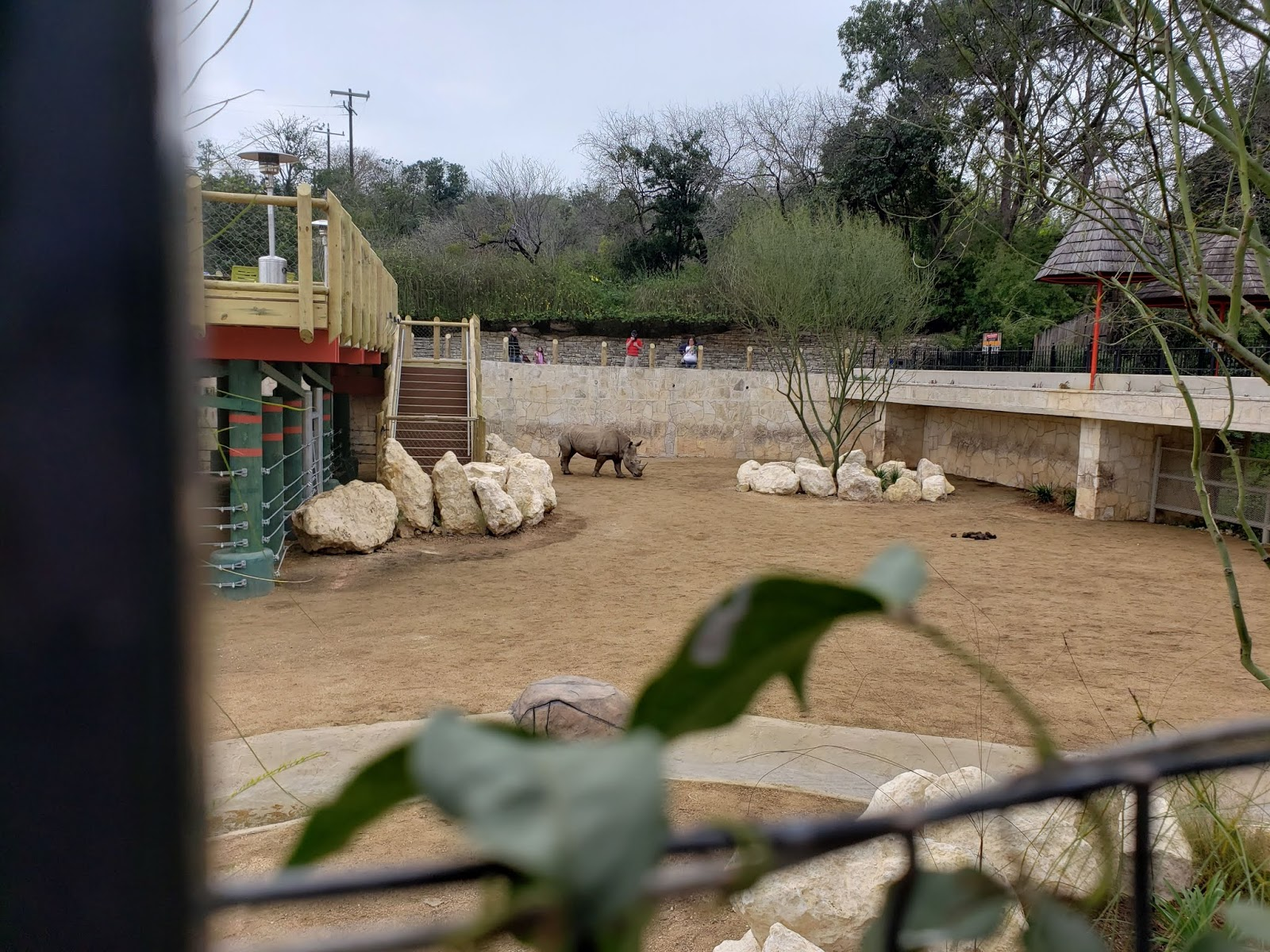 San Antonio Zoo Rhinos Return