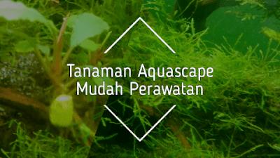 Tanaman aquascape mudah perawatan