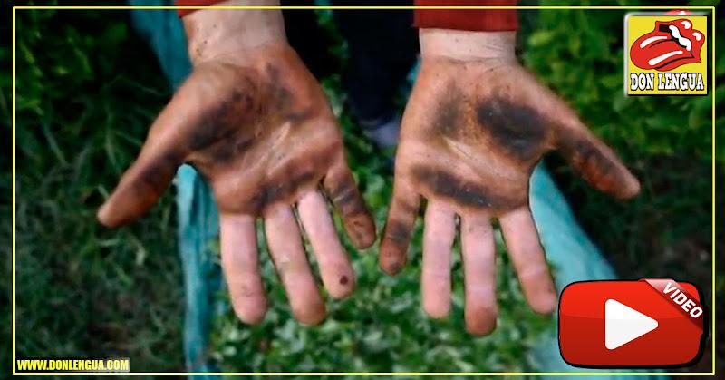 Venezolanos huyen a Colombia y ahora trabajan en plantaciones de coca