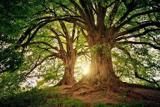 Poem about tree in Hindi