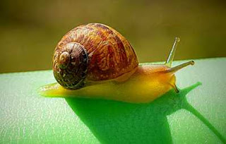 snail facts in hindi