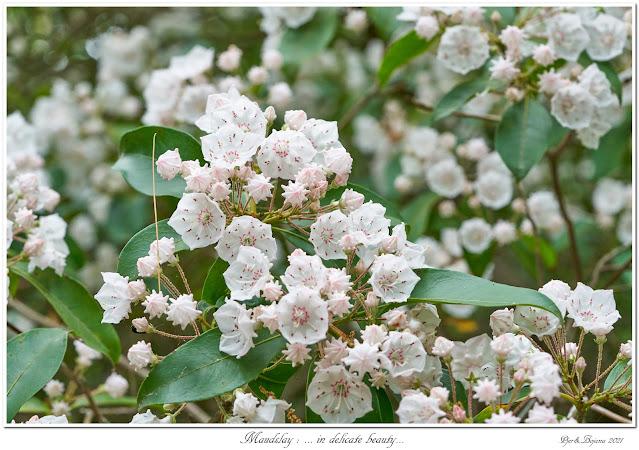 Maudslay: ... in delicate beauty...