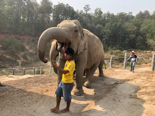 Elephant Jungle Sanctuary - Chiang Mai