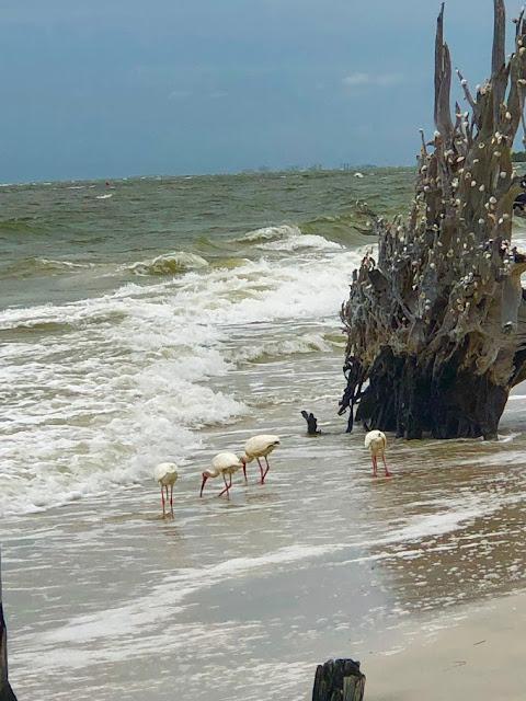 The Seashell Tree at Lovers Key Beach