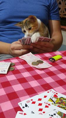kedi ve oyun