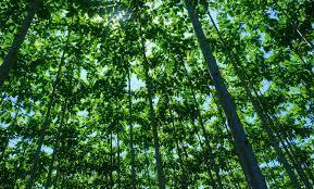 Kegiatan Pengukuhan Kawasan Hutan