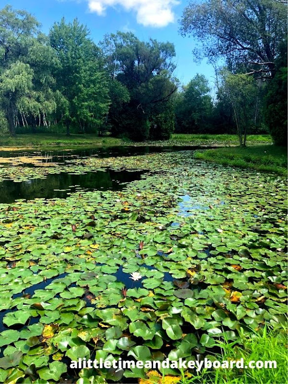 Pond of water lilies and frogs at Lynden Sculpture Garden