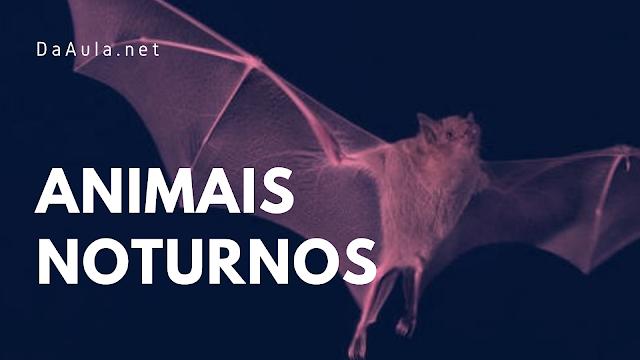 Biologia: Características de Animais Noturnos