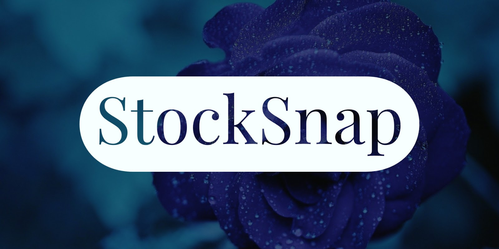 StockSnap - Free Stock Photography Images Sites