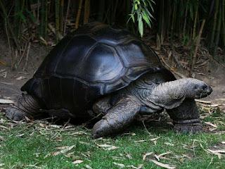 merawat-kura-kura-darat.jpg