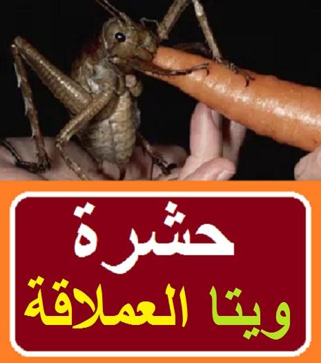 """""""حشرة الجن"""" """"حشرة آكلة لحوم البشر"""" """"الحشرة التي لا تموت"""" """"حشرة الدوب"""" """"حشرة سوداء لا تموت"""" """"ما وراء الطبيعة رفعت إسماعيل"""" """"الإنتوفاجا"""" """"رفعت إسماعيل وماجي"""" """"حشرة الشيطان"""" """"حشرة الشيطان ويكيبيديا"""" """"حشرة الشيطان في سوريا"""" """"الحشرة الشيطانية"""" """"الحشرة الشيطانية في سوريا"""" """"حشرة حمار الشيطان"""" """"حشره خيل الشيطان"""" """"شكل حشرة الشيطان"""" """"حشرة وجه الشيطان"""" """"حشرة الشيطان القاتلة"""" """"حشرة الشيطان في مصر"""" """"حشرة الانثروفاجا"""" """"حشرة اشمونيا"""" """"اضرار حشرة الشيطان"""" """"حشرة الاكلانة"""" """"حشرة البمبلا"""" """"حشرة ويتا"""" """"حشرة ويتا العملاقة"""" """"الحشرة ويتا"""" """"حشرات ويتا"""" """"حشرة الاكلانة"""" """"حشرة الانثروفاجا"""" """"حشرة اشمونيا"""" """"حشرة البمبلا"""""""