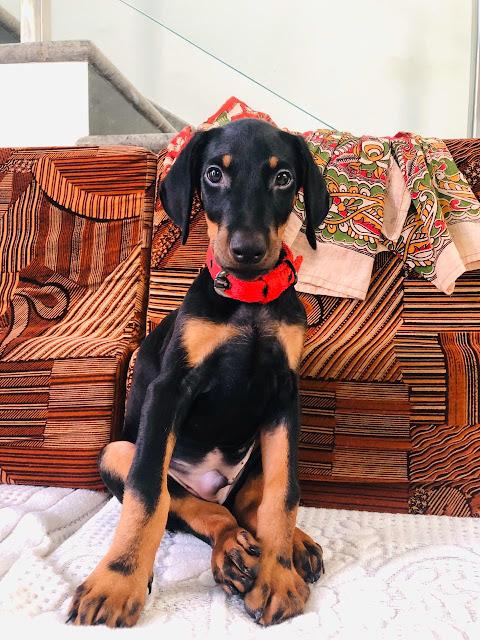Dog Images Cute HD