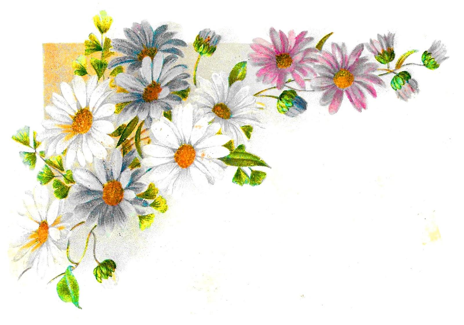 Antique Images Printable Botanical Flower Daisy Corner Design