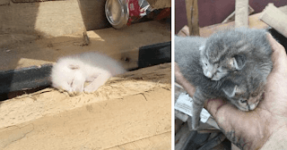 Man Hears Kittens Meowing, Spends 7 Hours Digging In Dumpster To Save Ditched Litter Of Furballs