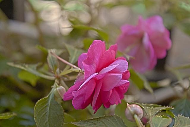 Foto.Una flor