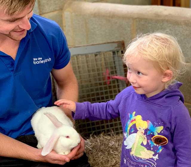 3 year old stroking a white rabbit while looking at a staff member with We are barleylands on his blue top