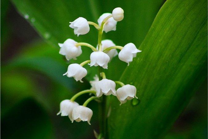 Flores bonitas para mejorar tu vida