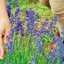 Κόνιτσα:Ολοκληρωμένο πρόγραμμα  Κατάρτισης  Αρωματικών/ Φαρμακευτικών  φυτών
