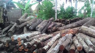 produsen supplier jual kayu kasia bahan kusen murah 2016 2017 di jawa barat jabodetabek
