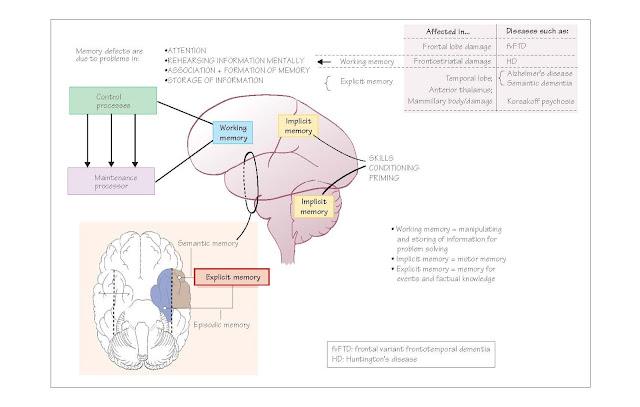 Memory, Working memory, disorders of working memory, Long-term memory,