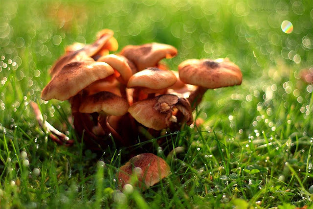 mushrooms in the grass, raindrops