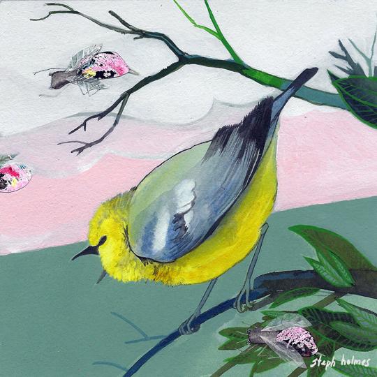 Blue Winged Warbler bird