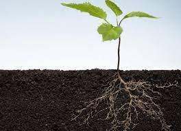 Biomassa Bawah Tanah