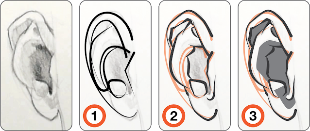 The steps to drawing an ear demonstrated in the above video.