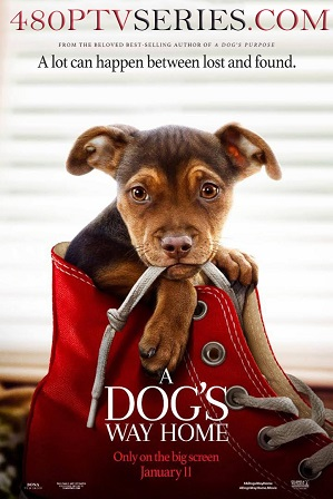 Watch Online Free A Dog's Way Home (2019) Full Hindi Dual Audio Movie Download 480p 720p Bluray
