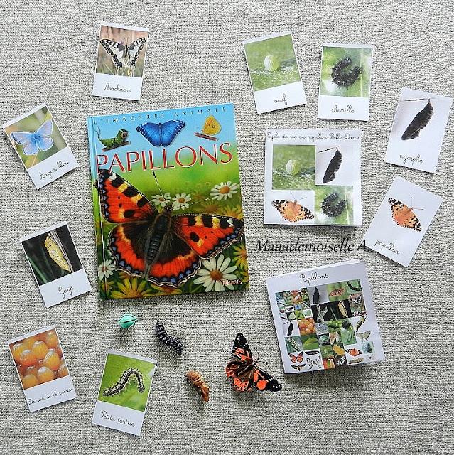 || Nos activités sur les papillons : Cartes de nomenclature, figurines cycle de vie, livre Les papillons