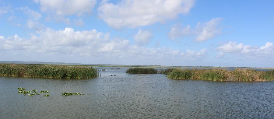 Lago Apopka