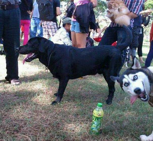 19 Hilarious Photobombing Dogs That Made Our Day