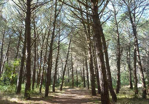 Foresta Mercadante