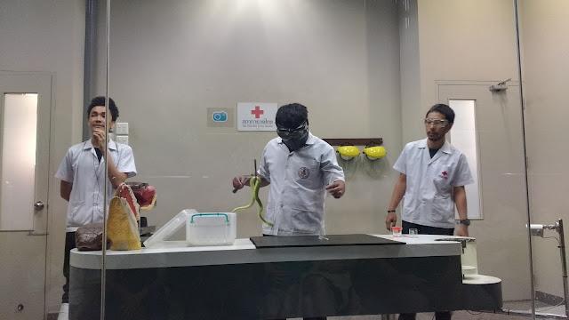 Procedimento de extração de veneno de cobra na Snake Farm, em Bangkok.