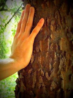 Dotyk Drzewa