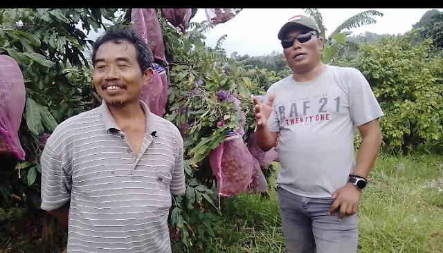 Kiat Sukses Milyarder Hasil Olah Kebun di Grobogan