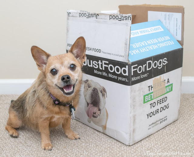 Jada next to a Just Food For Dogs box