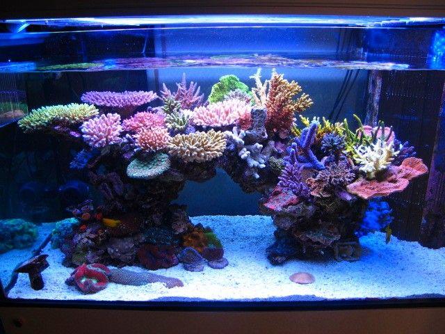 Ingin Punya Aquarium Air Laut? Ketahui 4 Hal Ini Dulu