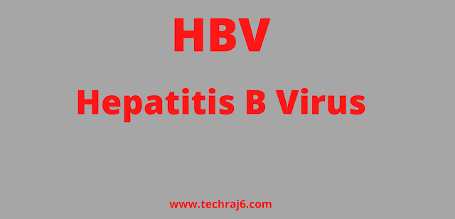 HBV full form, What is the full form of HBV