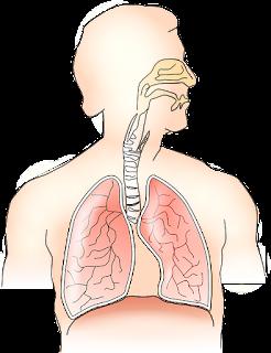 Apa penyebab anak 2 tahun bau mulut?