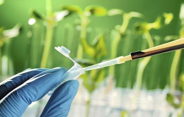 Pengertian Bioteknologi Modern Dan Konvensional Serta Contoh Produknya
