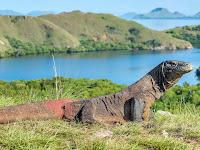 Keindahan pulau komodo  - Tanah Naga Komodo
