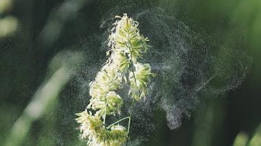 ¿Qué oligoelementos tomar para la alergia?