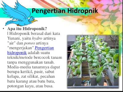Pengertian Dan Manfa At Tanaman Hidroponik Bagi Petani