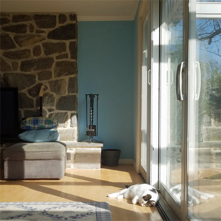 image of Olivia the White Farm Cat lying on the floor in a patch of sunshine, next to a glass door
