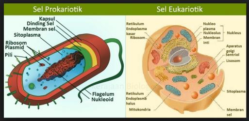 Perbedaan Eukariotik Dan Prokariotik